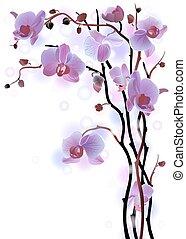 Antecedentes verticales con orquídeas violetas