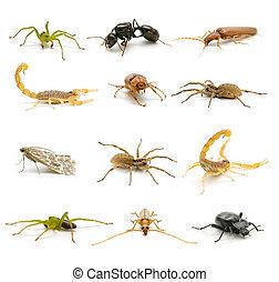 arácnidos, insectos