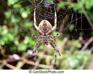 Araña esperando comida