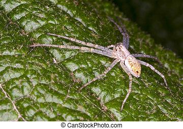 Araña esperando en una hoja