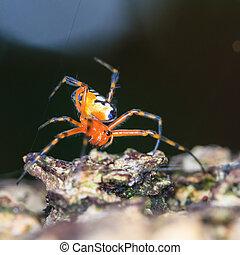 Araña esperando la captura.