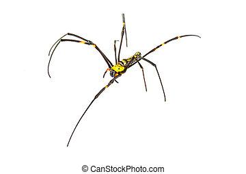 Araña sobre fondo blanco