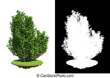 Arbusto aislado de primavera con máscara de raster.
