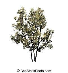 Arbusto de avellana común con pieles de gato