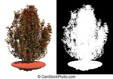 Arbusto rojo aislado con máscara de raster.