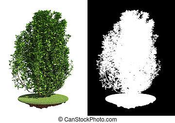 Arbusto verde aislado con máscara de raster.