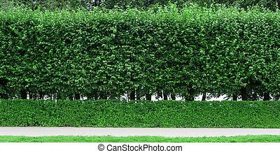 Arbustos cortados en el parque y pista