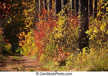 Arbustos de otoño coloridos