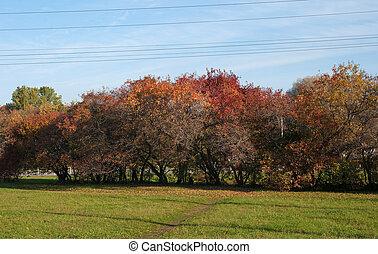 arbustos de otoño, rojo y amarillo en el fondo del cielo