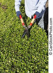 Arbustos en el jardín. Trabajo de jardín de otoño.