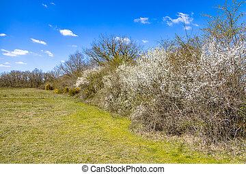arbustos, florecer, marzo, árboles