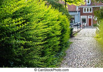arbustos verdes. Amsterdam