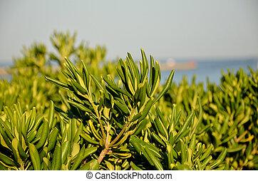 arbustos verdes