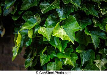 arbustos verdes. Park