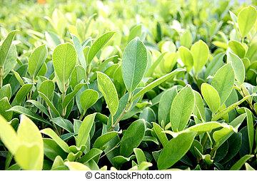 arbustos verdes.