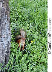 Ardilla en los arbustos verdes del parque
