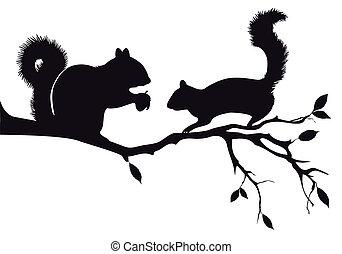 Ardillas en el árbol, vector