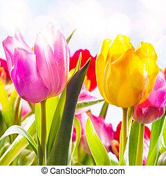 Armario de dos tulipanes frescos vibrantes al aire libre