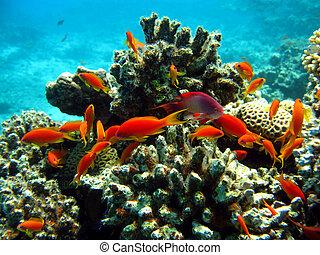 arrecife de coral con bancos de peces