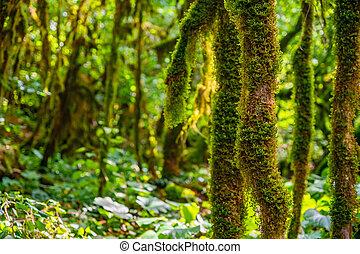 arriba, musgo, cierre, árbol, branches., crecer