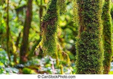 arriba, musgo, crecer, cierre, árbol, branches.