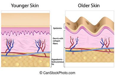 Arrugado contra suave piel