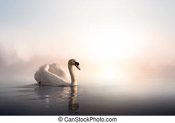 arte, cisne, agua, flotar, día, salida del sol