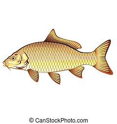 Arte de vector de carpa dorada común