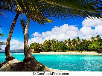 arte, tropical, mar caribe, laguna