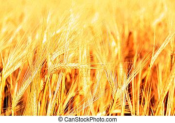 Atardecer sobre el campo con hierba verde