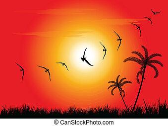 Atardecer y pájaros