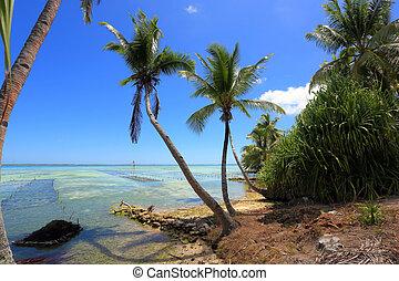 atolón, palmas de coco, encima