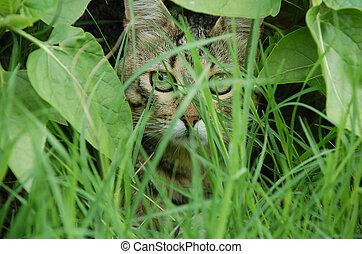 atrás, gato, hojas, paliza
