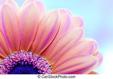 atrás, primer plano, flor, luz del sol