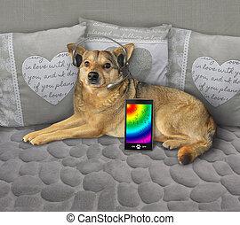 auriculares, perro, sofá