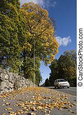Auto en otoño
