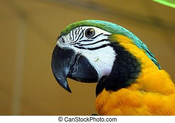 aves, #1