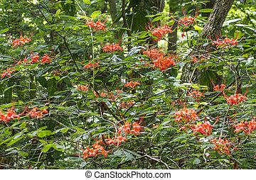 Azaleas naranjas silvestres floreciendo en un bosque