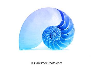 azul, cáscara, patrón, famoso, nautilus, fibonacci, geométrico
