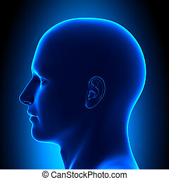 azul, cabeza, -, anatomía, vista, lado, estafar