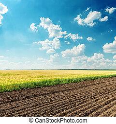 azul, campos, cielo, profundo, nublado, debajo, agricultura