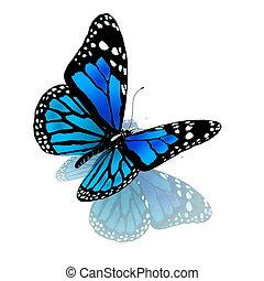 azul, color, mariposa, blanco