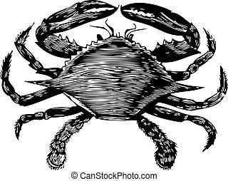 azul, grabado, (callinectes, hastatus), cangrejo