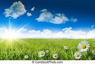 azul, hierba salvaje, cielo, margaritas