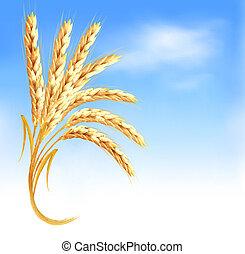 azul, orejas, frente, vector, trigo, illustration., sky.