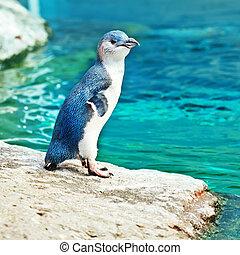 azul, pingüino
