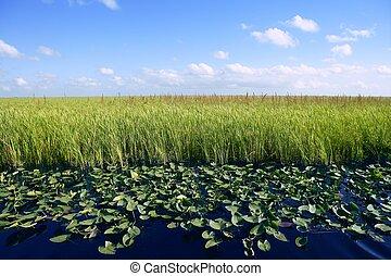 azul, plantas, pantanos, naturaleza, florida, cielo, everglades, verde, horizonte