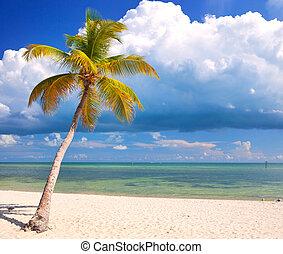 azul, verano, nubes, cielo, estados unidos de américa, florida, claro, árboles, agua, llaves, océano, tropical, cristal, palma, paraíso, atlántico