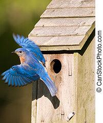 azulejo, birdhouse, salida