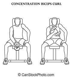 bíceps, ejercicio, vector, concentración, rizo, ilustración, contorno, entrenamiento, fuerza
